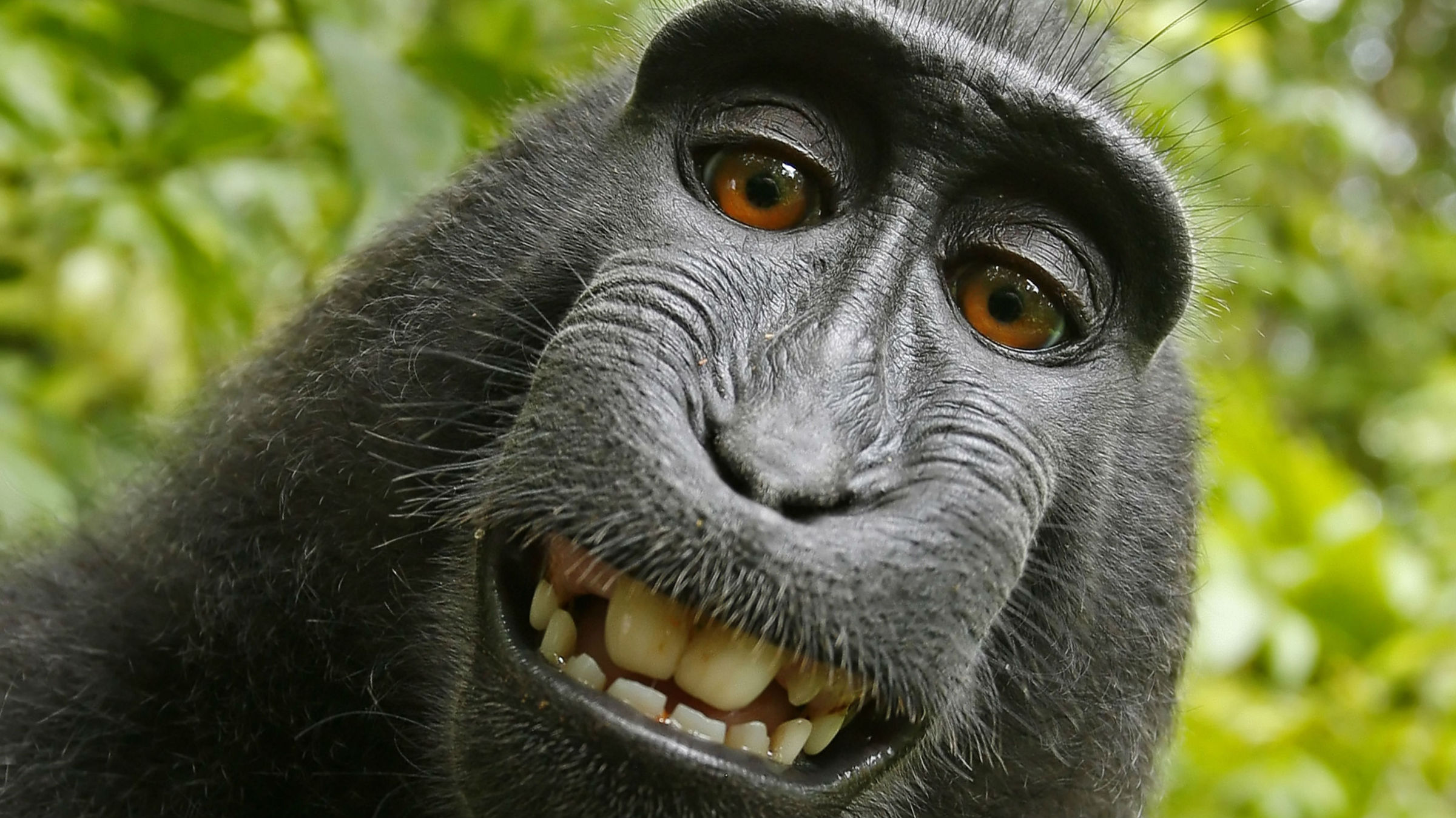 Makak selfie